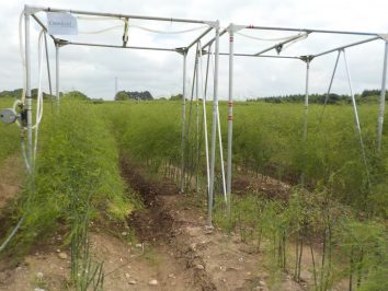 Horticultural research at Cranfield University