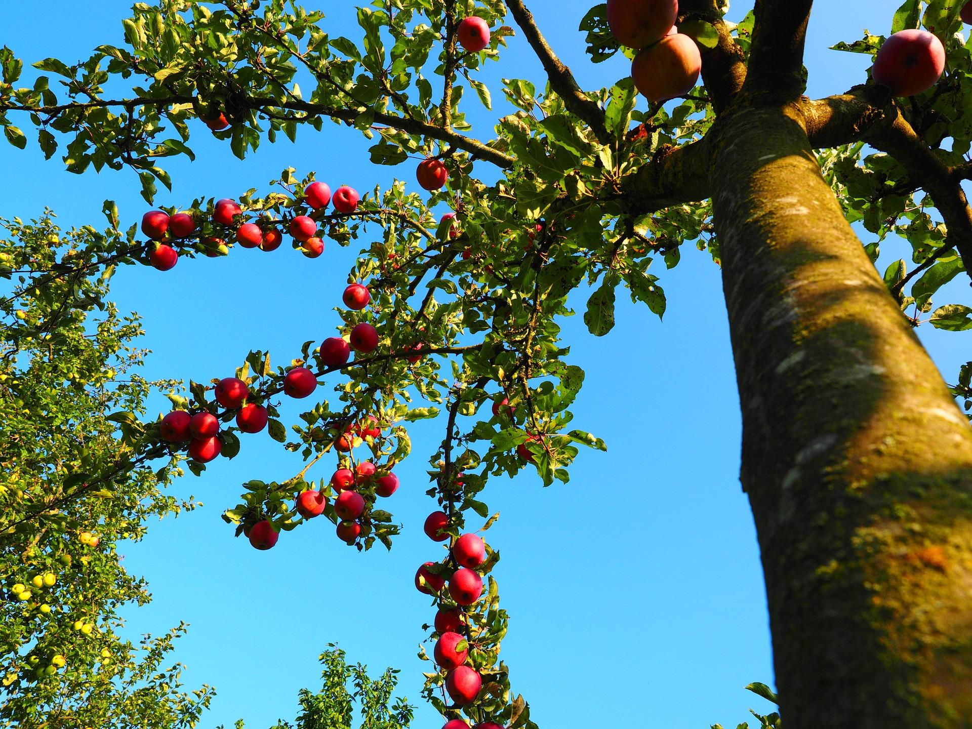 Cranfield University, food supply chain, Pixabay