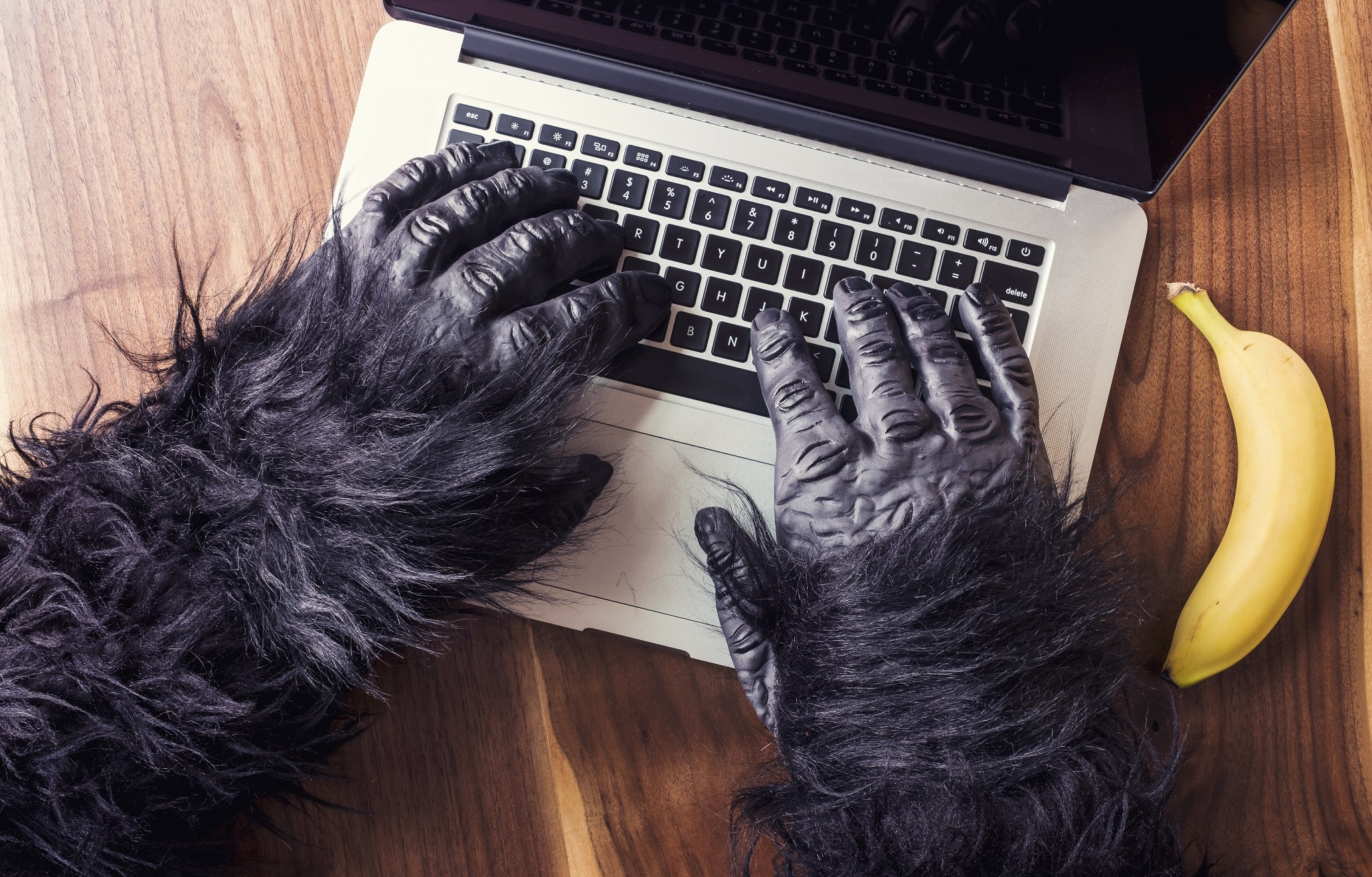 Photo of gorilla hands using a computer