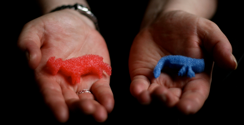 photo of hands offering a small red sponge animal and a small blue sponge animal