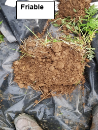 friable soil