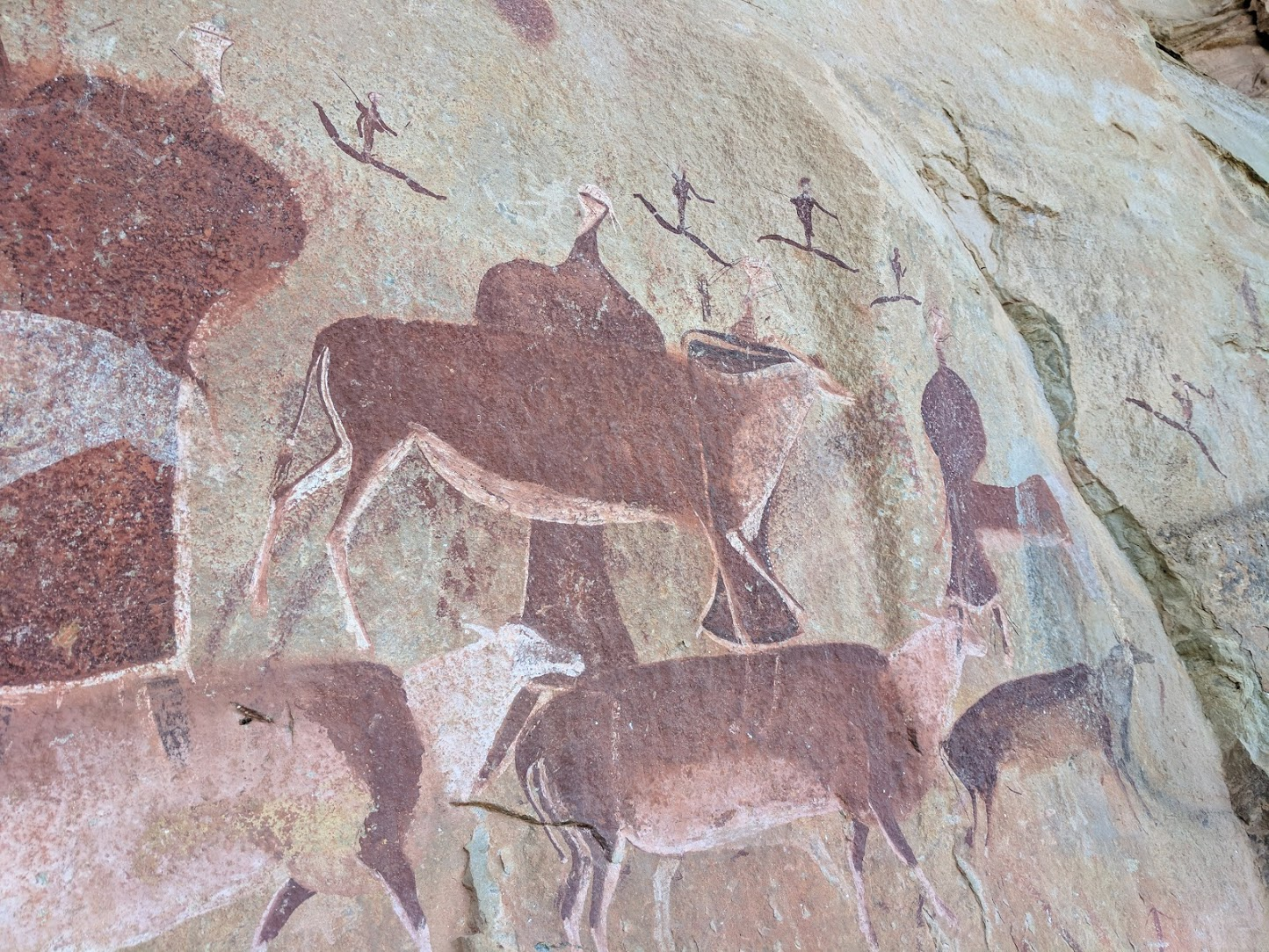 Bushman Cave Paintings from Trip