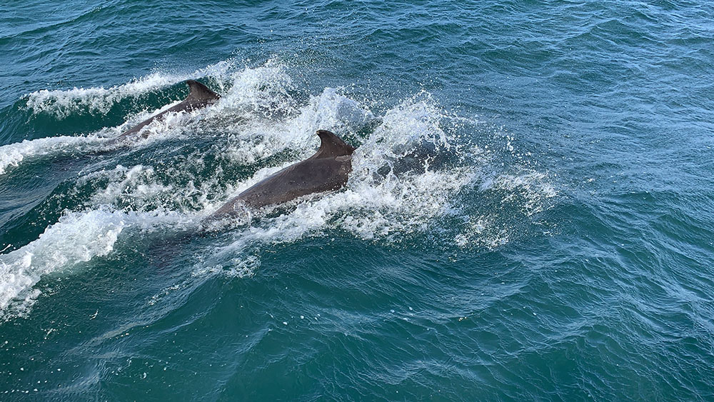 Dolphins spotted on a sailing trip to the Outer Hebrides